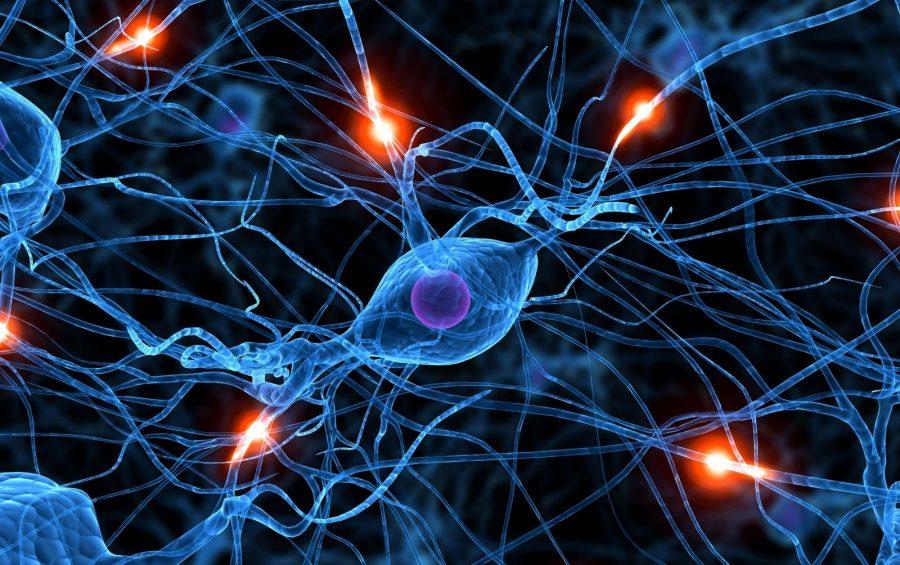Neuroscienze - Neuroscienza
